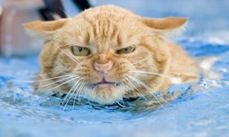 cat-in-pool